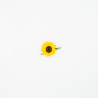 Erhöhte ansicht der einzelnen gelben blume auf weißem hintergrund