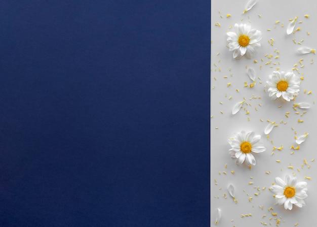 Erhöhte ansicht der gänseblümchenblume über doppelhintergrund