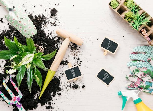 Erhöhte ansicht der pflanze; boden; gartenhandschuh; rechen; showel; sprüher; torfschale; stange und dibber auf schreibtisch aus holz