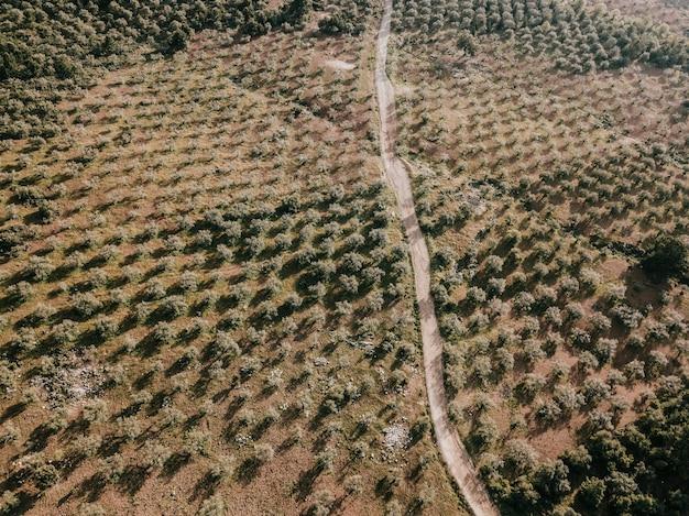 Erhöhte ansicht der straße umgeben durch die bäume, die auf landschaft wachsen