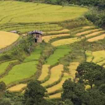 Erhöhte ansicht des terassenförmig angelegten feldes, punakha, punakha-tal, punakha-bezirk, bhutan