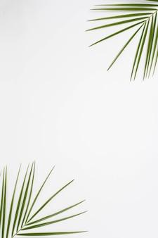 Erhöhte ansicht von palmblättern an der ecke des weißen hintergrundes