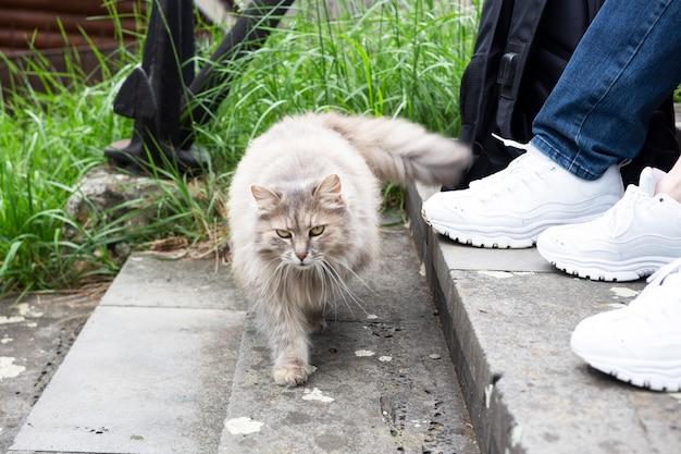 Erholung im freien, menschen und ihr katzenlebensstilkonzept männliche und weibliche füße in weißen turnschuhen und eine katze neben ihr