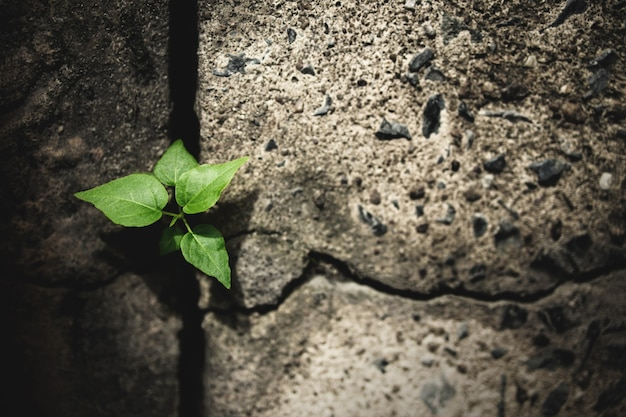 Erholung und herausforderung im leben oder geschäftskonzept.wirtschaftskrisensymbol oder ökologiesystem.neues sprossgrünpflanzenwachstum in gerissenem beton