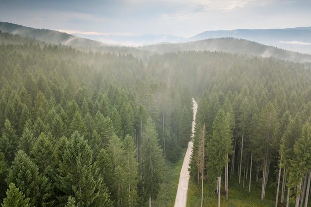 Erkundung der wälder