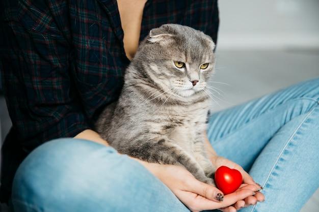 Ernste katze, die auf händen der hosteß sitzt