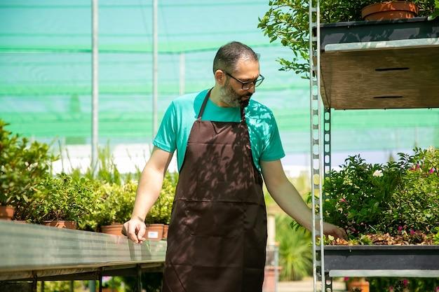 Ernster kaukasischer mann, der im treibhaus steht und pflanzen betrachtet. nachdenklicher bärtiger gärtner, der schwarze schürze trägt und allein im gewächshaus arbeitet. kommerzielle gartenarbeit und sommerkonzept