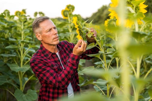 Ernster mann, der eine sonnenblume betrachtet