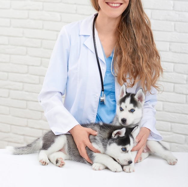 Ernte des jungen und lächelnden weiblichen tierarztes in der modernen klinik, die durch hände hält, sich kümmert, kleine heisere hunde umarmend. doktor in weiß mit kleinem welpen mit grauem fell und blauen augen.