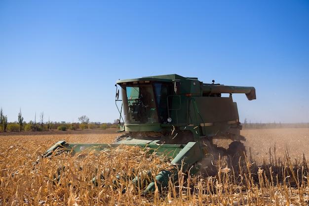 Ernte maisfeld im herbst. ernte arbeit auf maisfeld.
