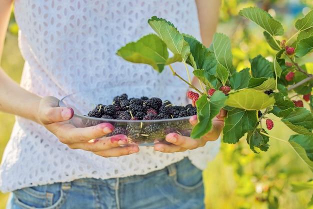 Ernte von reifen maulbeeren in teller in mädchenhänden
