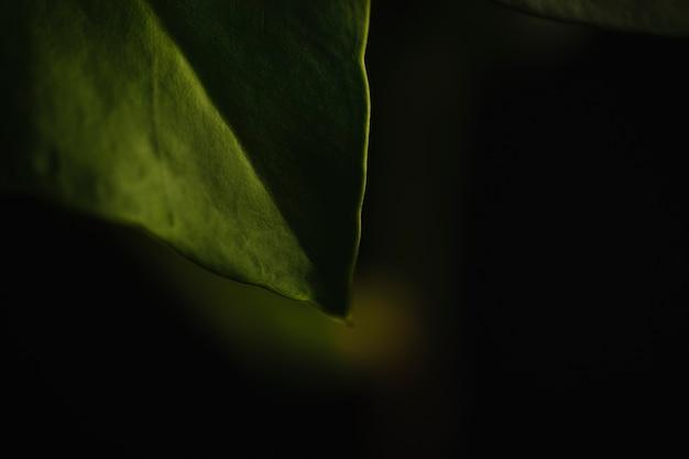 Ernteblatt auf dunklem hintergrund