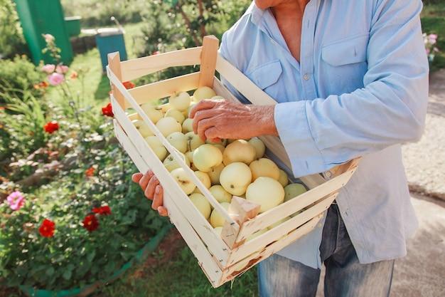 Ernten sie weiße äpfel in einer holzkiste, die für den export bereit sind.