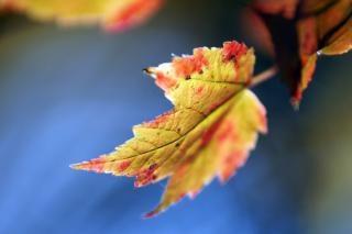 Erntezeit oktober