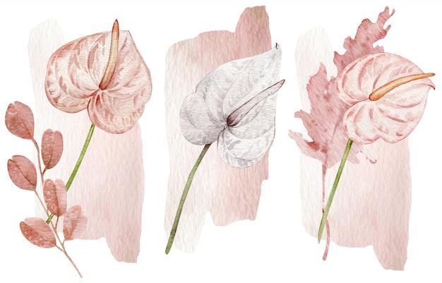Erröten sie rosa und weiße tropische blumen - anthurien. hand gezeichnete illustration lokalisiert auf weißer wand.