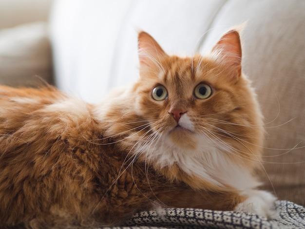 Erschrockene nette katze, die auf couch sitzt