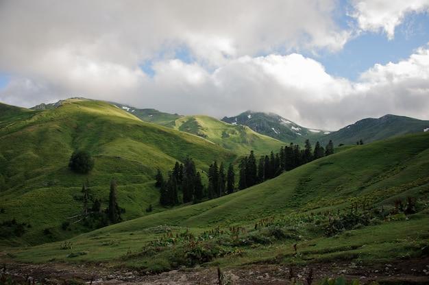 Erstaunliche ansicht der grünen hügel unter den wolken mit immergrünen bäumen in der mitte