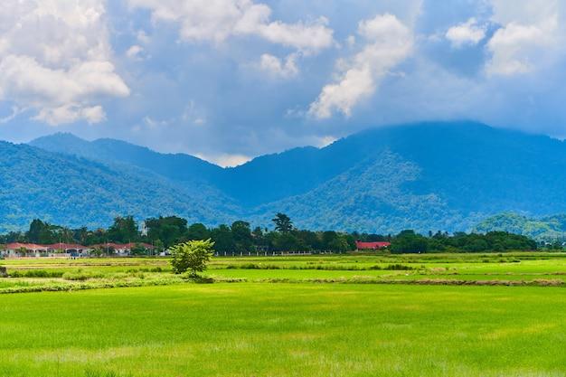 Erstaunliche asiatische naturlandschaft. riesiges grünes reisfeld mit bergen dahinter.