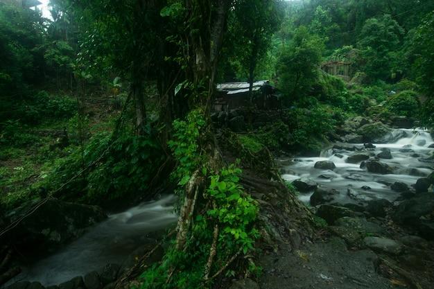 Erstaunliche aufnahme eines flusses, umgeben von wunderschöner natur