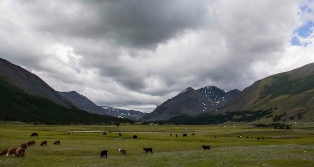 Erstaunliche aussicht auf ein tal und grasland mit tieren rund um den ort an einem wolkigen tag