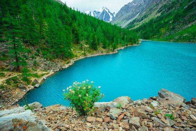 Erstaunliche berge mit nadelbaumwald und blauem fluss