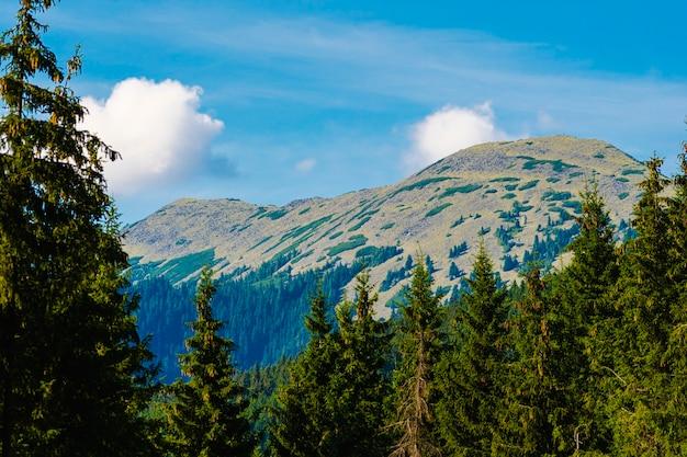 Erstaunliche berglandschaft mit blauem himmel mit weißen wolken, sonniger sommertag in bukowel-karpaten, ukraine. natürlicher hintergrund für reisen im freien.