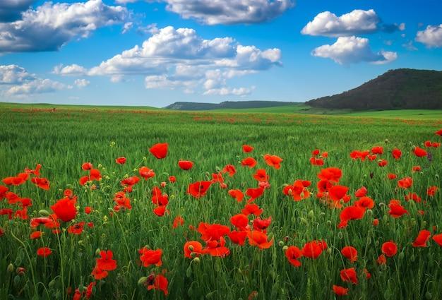 Erstaunliche blumenlandschaft mit blühendem rotem mohn, bewölktem blauem himmel und berg. natürliche schönheit und ausgezeichneter bunter designhintergrund.