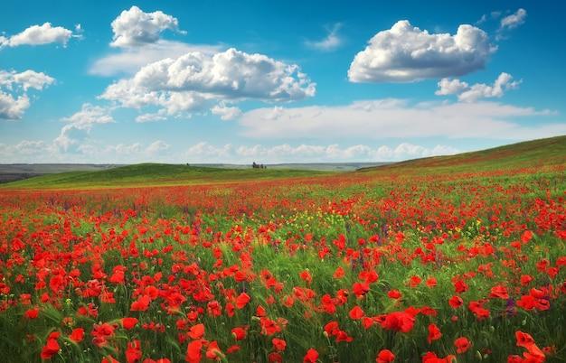 Erstaunliche blumenlandschaft und bewölkter blauer himmel. blühender roter mohn. natürliche schönheit und ausgezeichneter bunter designhintergrund.