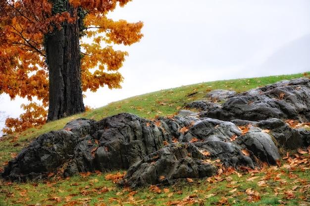 Erstaunliche landschaft eines hügels, der teilweise mit steinen und gras bedeckt ist
