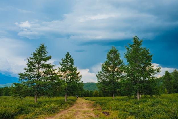Erstaunliche landschaft mit fußweg nahe nadelbäumen im hochland