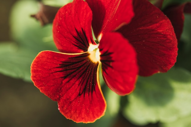 Erstaunliche rote frische blume