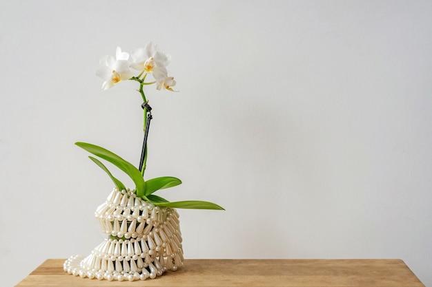 Erstaunliche tropische blühende orchideenpflanze im topf gewickelt mit weißem spitzenstoff