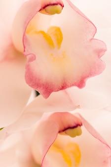 Erstaunliche weiße frische tropische blüte mit gelben stempeln