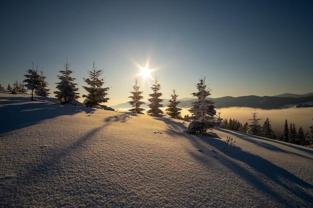Erstaunliche winterlandschaft mit kiefern aus schneebedecktem wald in kalten nebligen bergen bei sonnenaufgang.