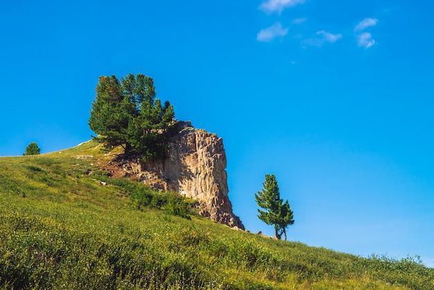 Erstaunliche zeder wächst auf schönem felsigem stein auf grünem hügel am sonnigen tag. reiche vegetation von hochländern unter blauem himmel. zweige der nadelbäume leuchten mit sonne. unvorstellbare berglandschaft.