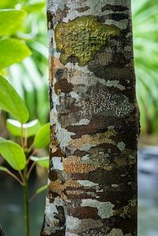 Erstaunlicher aller getarnter baumstamm, der von flechten im tropischen dschungel entworfen wurde.