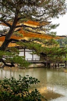 Erstaunlicher goldener pavillontempel an regnerischen tagen, nadelbaum, see im japanischen garten. unesco-weltkulturerbe.