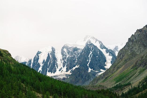 Erstaunlicher sehr großer gletscher hinter nadelbaumwald. snowy-gebirgszug im bewölkten himmel. wundervoller riesiger felsiger kamm mit schnee. stimmungsvolle landschaft majestätischer natur im hochland. atemberaubende berglandschaft