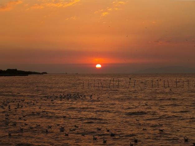 Erstaunlicher sonnenaufgang über dem golf von thailand mit unzähligen möwen