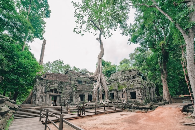 Erstaunlicher tempel ta prohm überwältigt mit bäumen, siem reap, kambodscha.