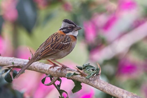 Erstaunlicher vogel, der mit großem vertrauen auf einem zweig ruht