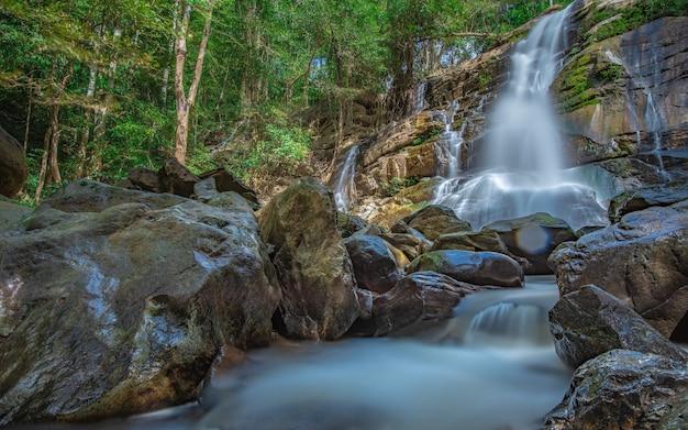 Erstaunlicher wasserfall im botanischen wald