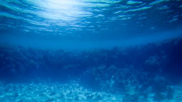 Erstaunliches unterwasserbild des roten meeresbodens. bunte korallenfische und wachsendes riff unter der wasseroberfläche