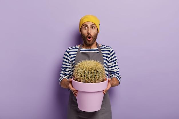 Erstaunter männlicher florist hält großen kaktus in topf gepflanzt, schockiert von der größe seiner zimmerpflanze