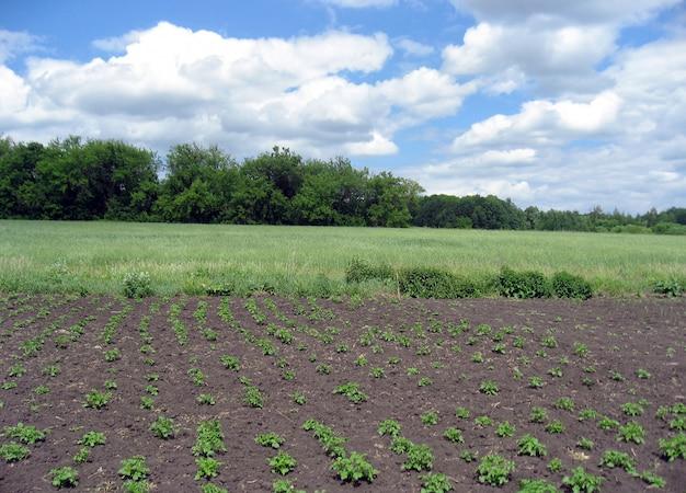 Erste grüne gemüsesprossen im dorfgarten