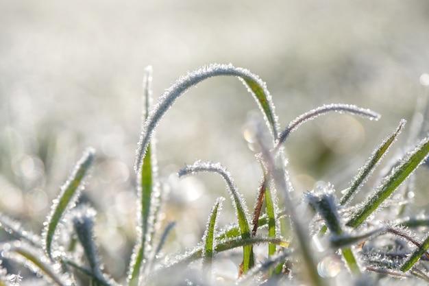 Erster frost. frost auf den blättern.