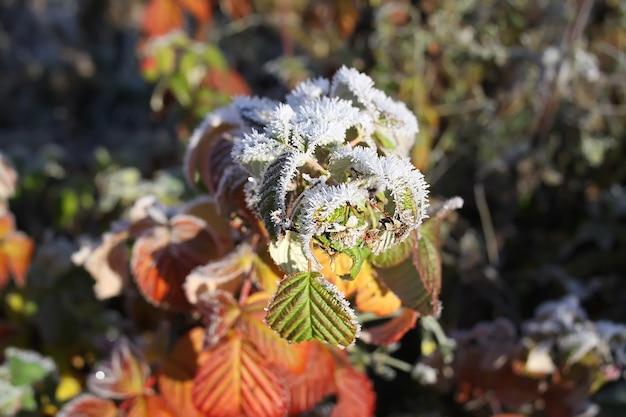 Erster frost im herbstpark. frühmorgens im november. nasse äste und blätter im reif