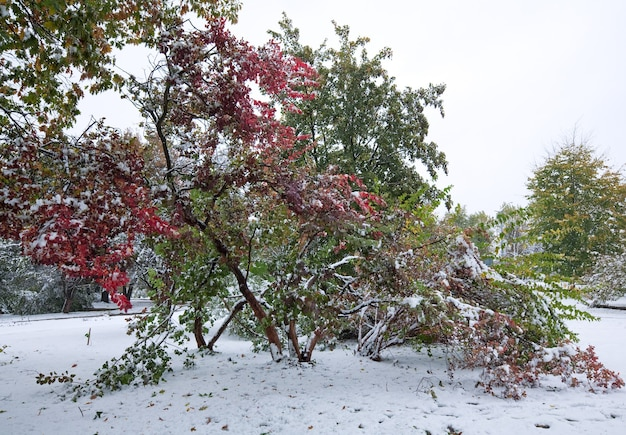 Erster herbst plötzlicher schnee im stadtpark