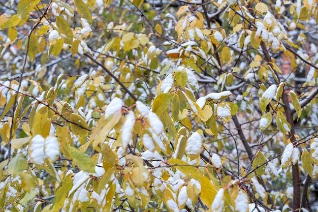 Erster schnee auf grünen blättern von pflanzen in einem stadtpark in der nähe von wohngebäuden