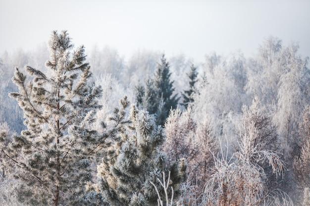 Erster schnee im park. winterlandschaft